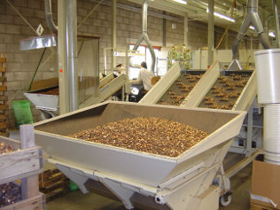 sorting_machine_flower_bulbs.jpg
