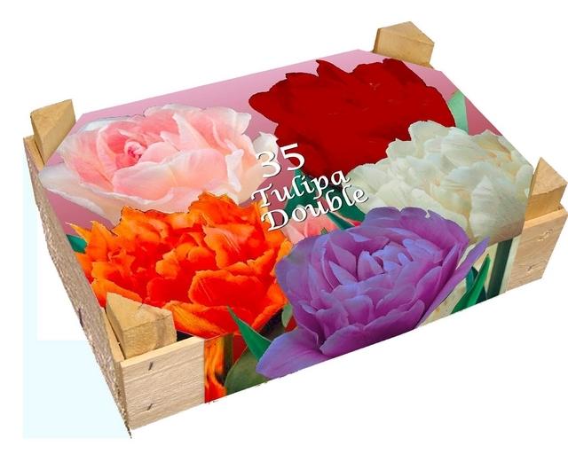 tulpen gef llt box zwiebeln kaufen jetzt bestellen. Black Bedroom Furniture Sets. Home Design Ideas
