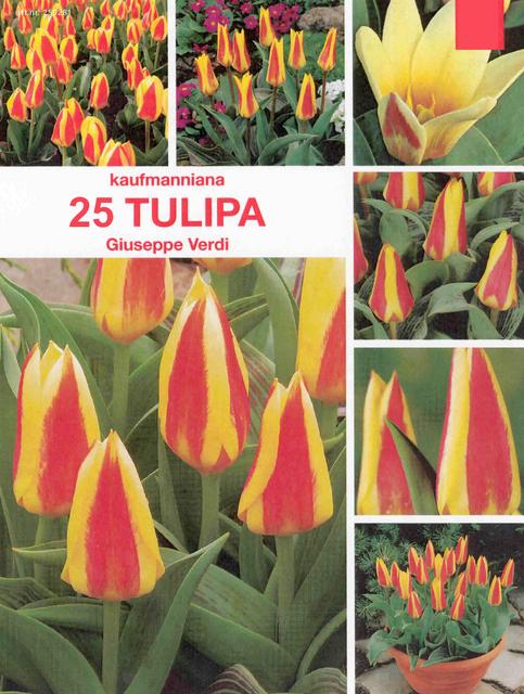 tulpen giuseppe verdi kaufen g nstig bestellen f r 2 99. Black Bedroom Furniture Sets. Home Design Ideas
