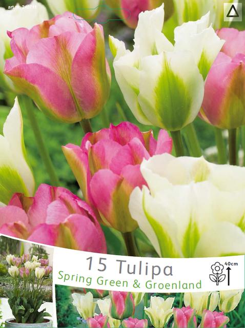 tulpen viridiflora spring green groenland zwiebeln kaufen. Black Bedroom Furniture Sets. Home Design Ideas