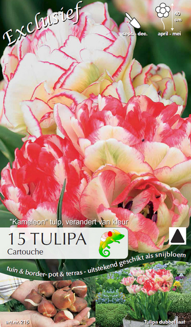 tulpen cartouche cham leon kaufen g nstig bestellen f r 2 99. Black Bedroom Furniture Sets. Home Design Ideas