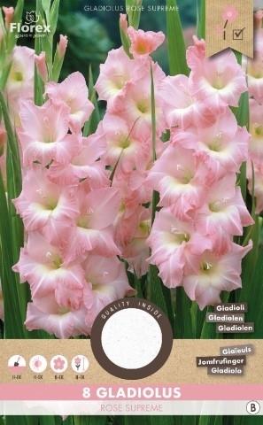 gladiolen rose supreme kaufen g nstig bestellen f r. Black Bedroom Furniture Sets. Home Design Ideas