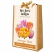 We Love Tulips - Orange Love