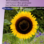 Sonnenblume Single Giant