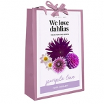 We Love Dahlias - Purple Love