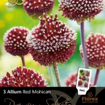Allium Red Mohican - Zierlauch